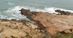 Cabo Polônio - lobos marinhos