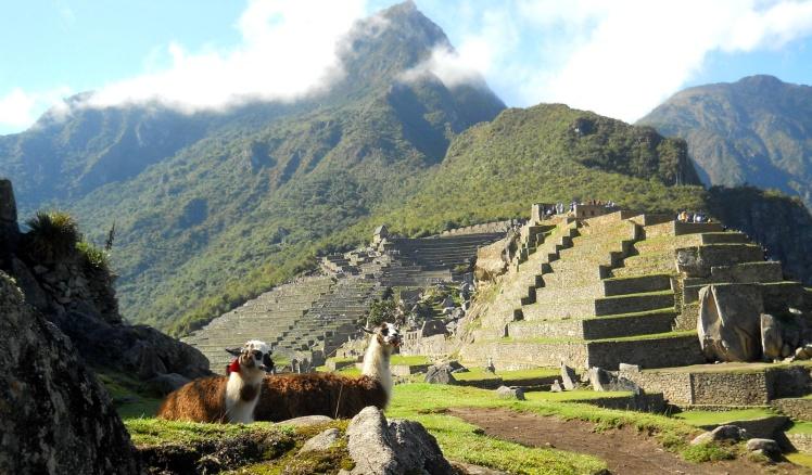 Llamas em Machu Picchu