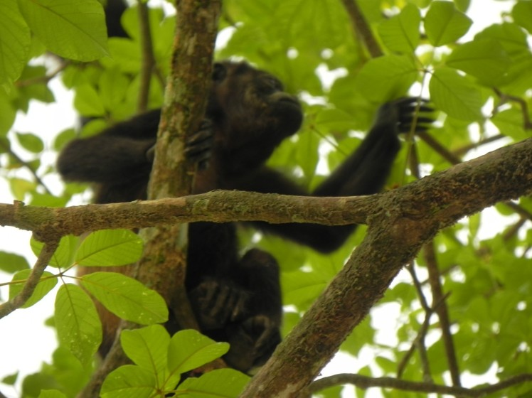 Macacos em Malpais
