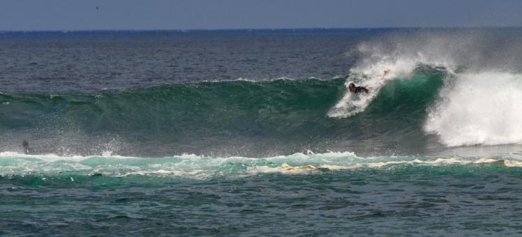 Tiburon em Punta Carola