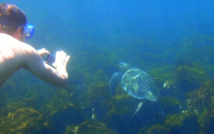 Tortuga em Punta Carola