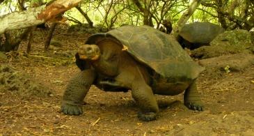 Galapaguera