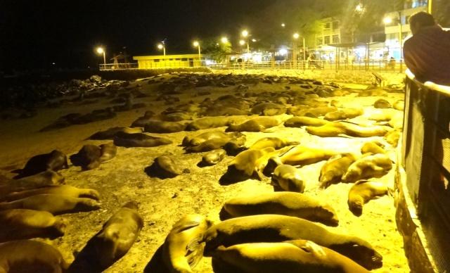 Leões marinhos dormindo na praia em San Cistobal