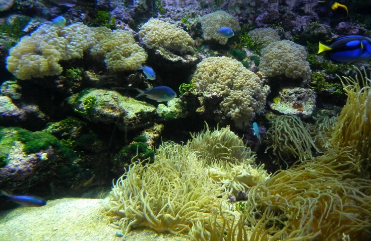 Sydney Aquarium - Great Reef Barrier