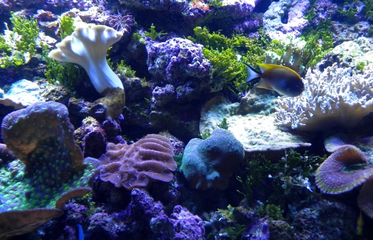 Sydney Aquarium - Great Reef Barrier