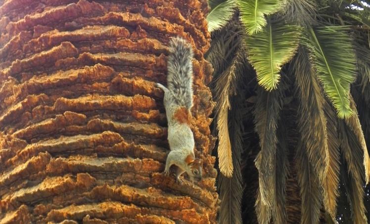 Esquilo no Parque Chapultepec
