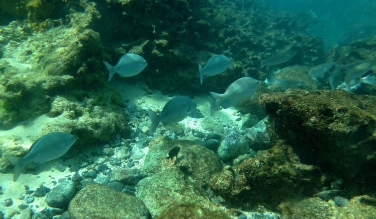 Snorkeling na Sharks Cove