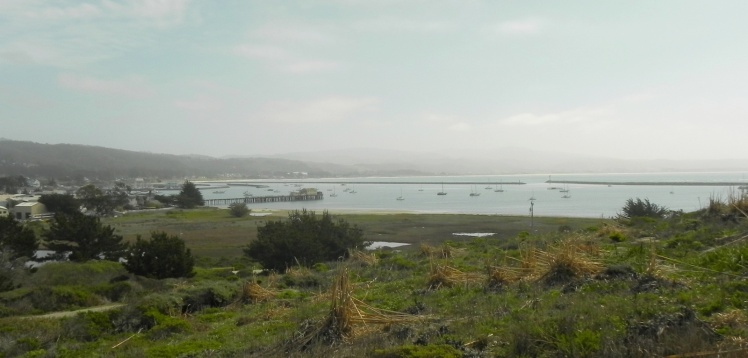 Half Moon Bay - Pillar Point Harbor