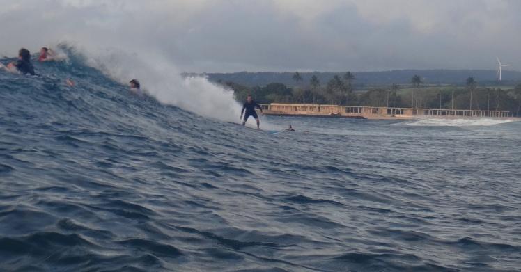 Tiburón surfing Haleiwa