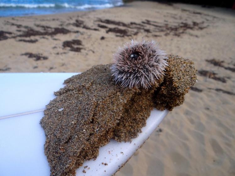 Minas de ouriços em Pools Beach